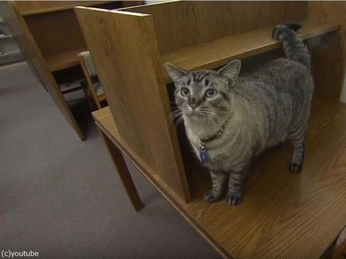 図書館猫の成り行き00