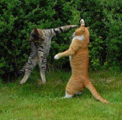 壮絶なる2匹の猫05