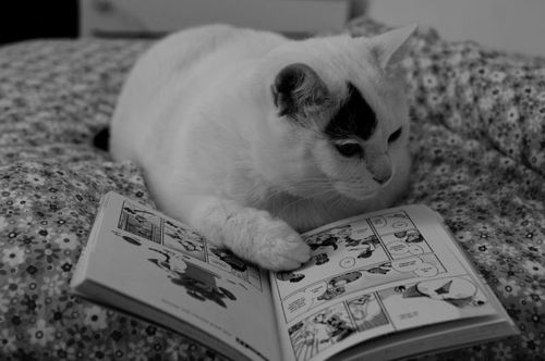 読書猫02