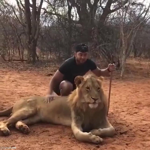 ライオンのクシャミ01