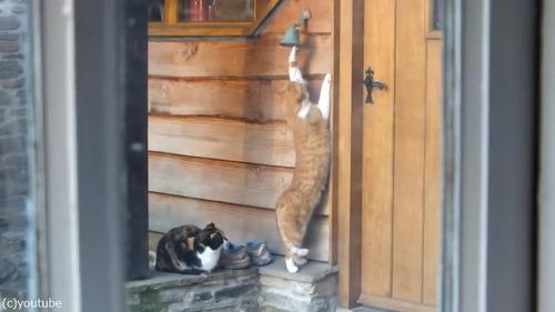 猫「ごはんくださいニャ—」03