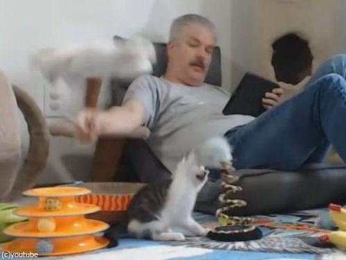 猫の宙返り04