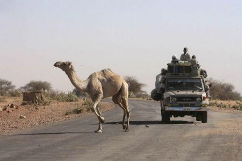 道路を渡る動物18