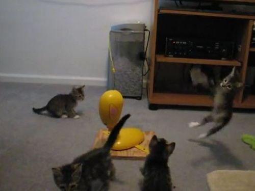 思うままに釣られる子猫たち02