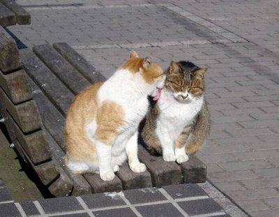 愛し合い猫05