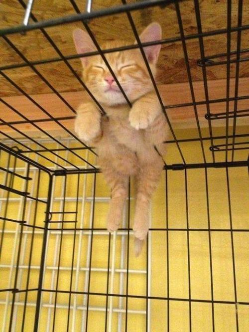 猫はどこでも寝る01