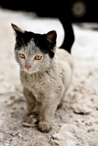 変わった毛並みの猫08
