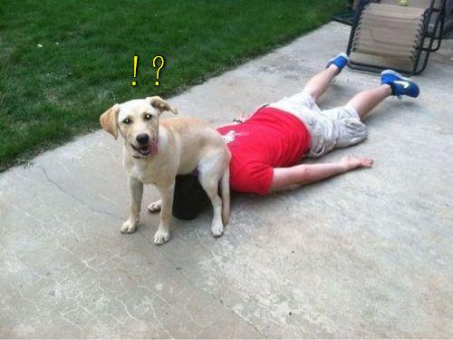 「おすわり」する場所を間違えた犬00