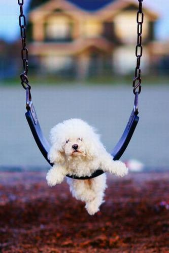 ブランコ犬10