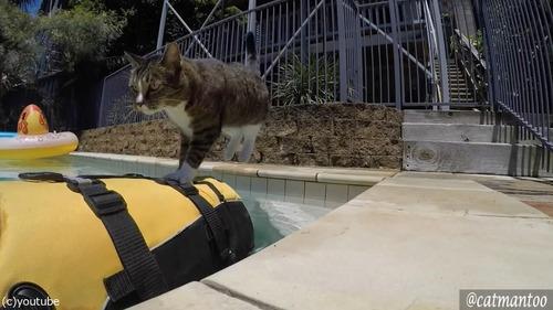 犬の背中に乗ってプール遊びをする猫05