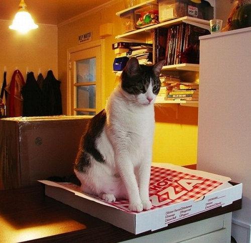 ピザ猫02