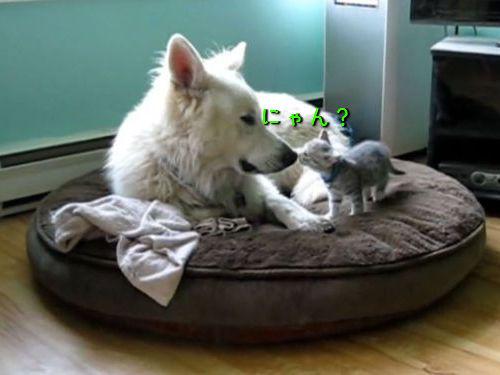 子猫と犬00
