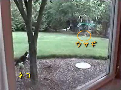 猫vsウサギ