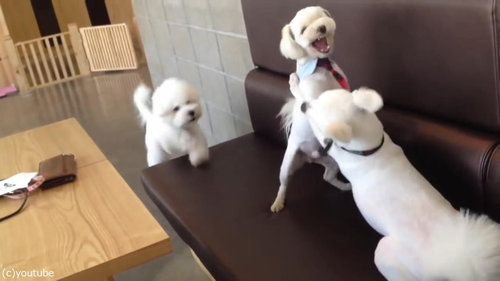 ケンカを始めた犬2匹と仲裁する1匹03