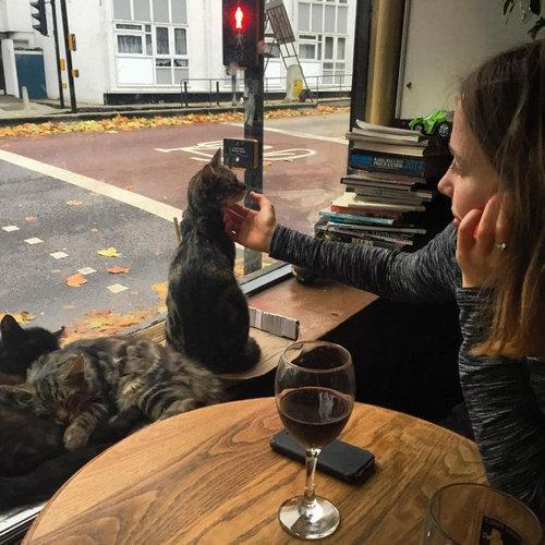 イギリスの猫パブ03