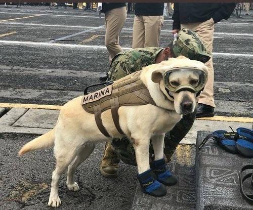 メキシコ地震で52人を救った犬01