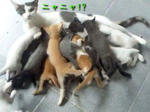 子猫16匹