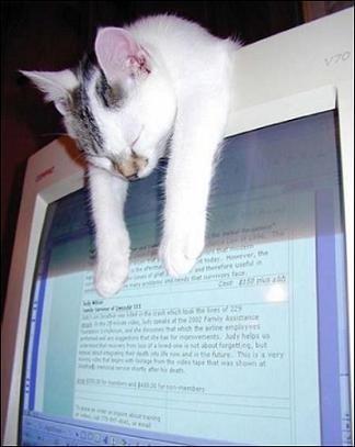 眠る猫11