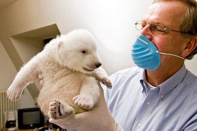 白クマの子供がかわいすぎる06