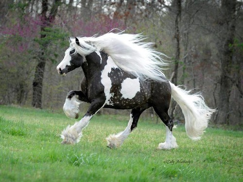 立派な口ヒゲのある馬01