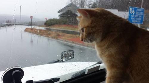 トラック運転手の猫が行方不明も意外な再会03