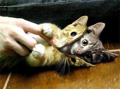 こんな猫はいやだ14