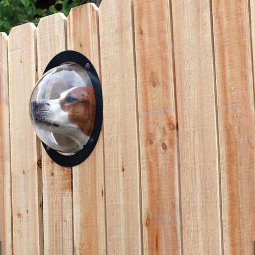 壊れたフェンスの修繕を隣の犬が嫌がる02