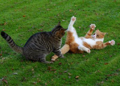 壮絶なる2匹の猫15