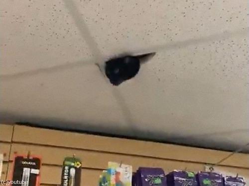 監視カメラだと思ったら猫だった03