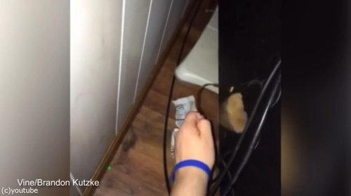 猫の手を借りる方法05