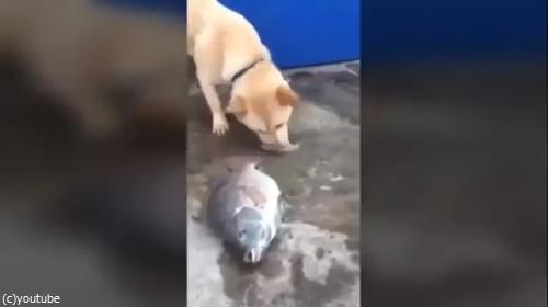 魚を助ける犬01