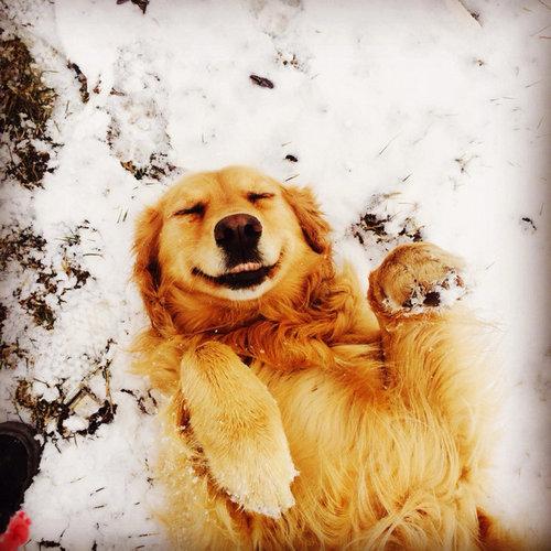 雪を喜ぶ動物02