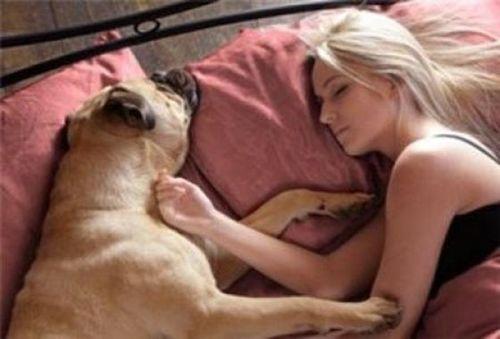 ペットと睡眠11