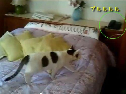 電話に出る猫