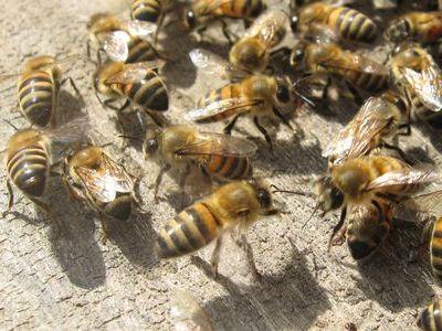 蜂に襲われるパトカー00