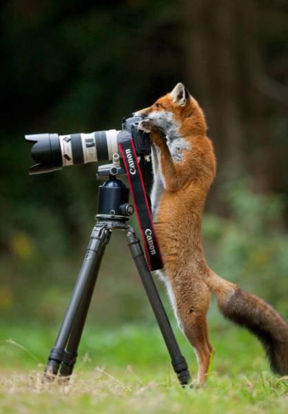 カメラマンな動物10