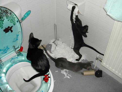 猫の恐怖17