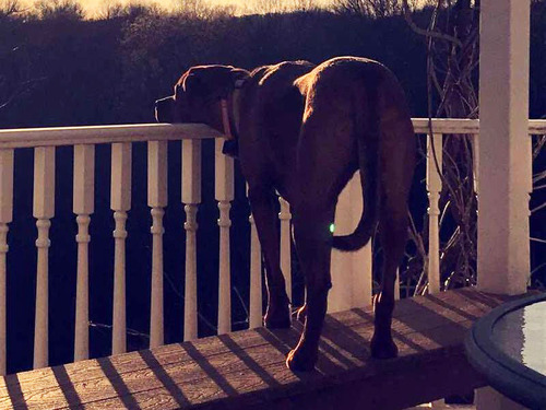 夕日を毎日見つめる犬02