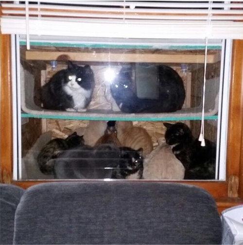猫水槽01