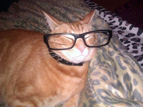 メガネ猫09