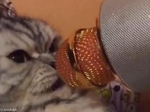 カラオケマイクと怒った猫03