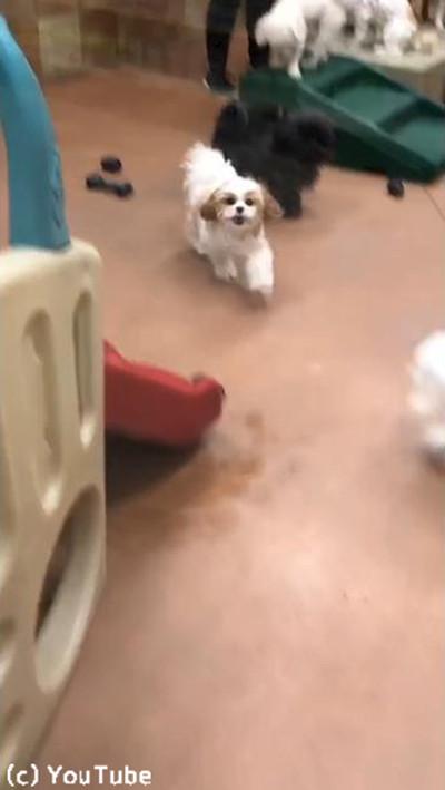ペットホテルに預けられていた犬、飼い主を見つけた瞬間…03