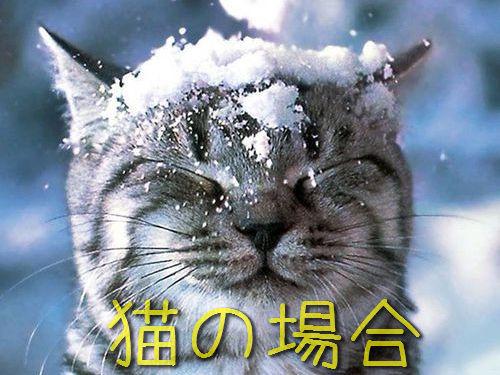 雪で遊んだ後の虎00