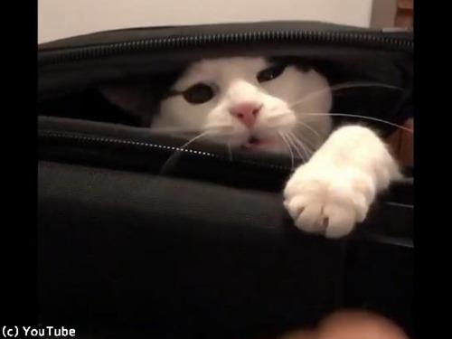 スーツケースを占拠する猫00