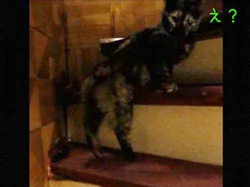華麗に階段を登る猫