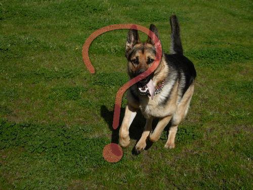 犬の遊びタイムが終わったとき00