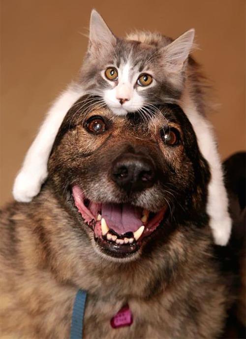 猫をかぶる犬たち03