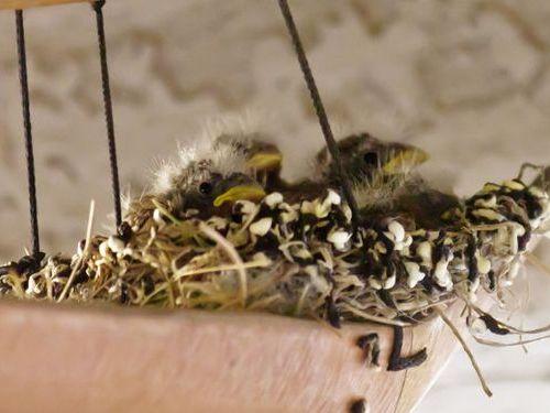 ウインドチャイムに鳥の巣03