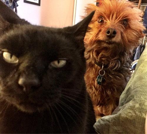 「猫が命を狙ってると同時に、犬がそれを警告しようとしてる」01