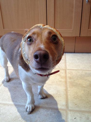 犬とパンの耳05